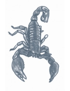 Prison scorpion temporary tattoo Tinsley Transfers PR-301