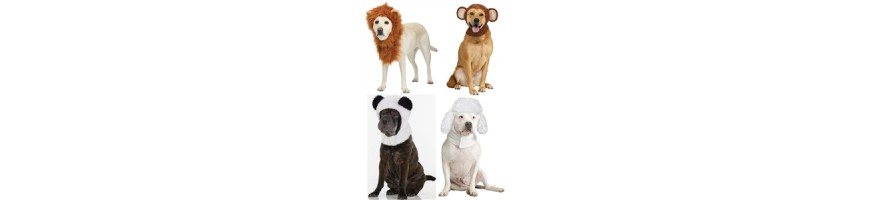 Pet Costumes To Buy