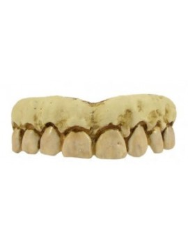 Billy Bob Skeleton teeth BB-10120